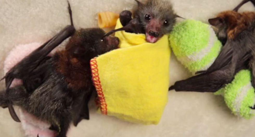 Personas atacan con fuego a murciélagos porque pensaron que transmiten el coronavirus  (Foto: Cortesía Wakaleo)