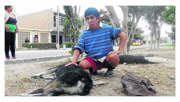 Chimbote: Delincuentes envenenan a cinco perros y un gato para robar en vivienda