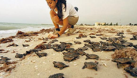El cambio climático amenaza la población de tortugas marinas