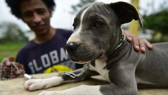 Vecinos de Huaura serán multados con más de S/8 mil por tenencia irresponsable de sus mascotas (VIDEO)