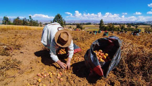 Director de Agricultura, Ulises Panez, informa que eso influye en los precios  de estos productos en los principales mercados. (Foto: Difusión)