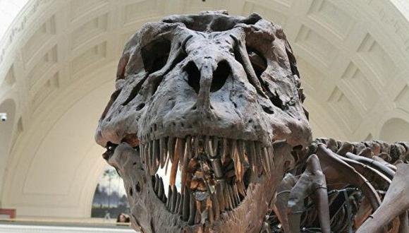 A solo unos 700 metros de donde se encontró el cráneo fosilizado de Llukalkan, los científicos habían desenterrado previamente los restos de otro dinosaurio carnívoro. ( Foto: Journal of Vertebrate Paleontology)