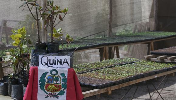 Universidad Nacional de Ingeniería recibe 24 árboles de la quina para promover su preservación y difundir su valor. Foto: Archivo GEC