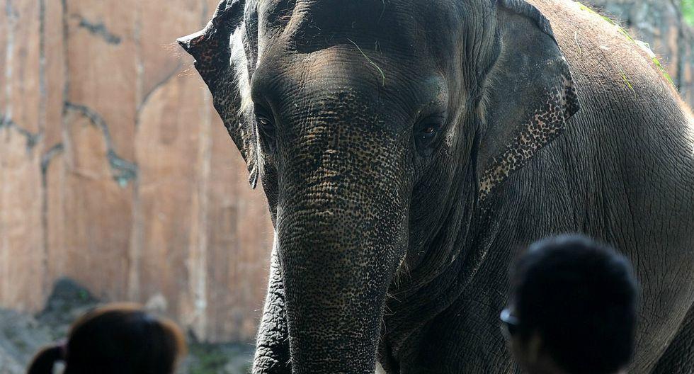 Conoce la historia del elefante deprimido en un zoológico en Filipinas