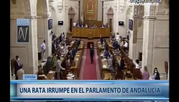 Roedor trajo temor en el Parlamento de Andalucía en España. (Canal N)