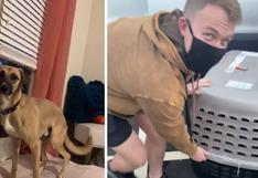 El soldado de Estados Unidos que adoptó a un perro que conoció en las calles de Afganistán