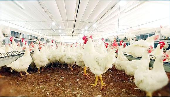 Minagri: Producción de pollo se incrementó en 3.5%