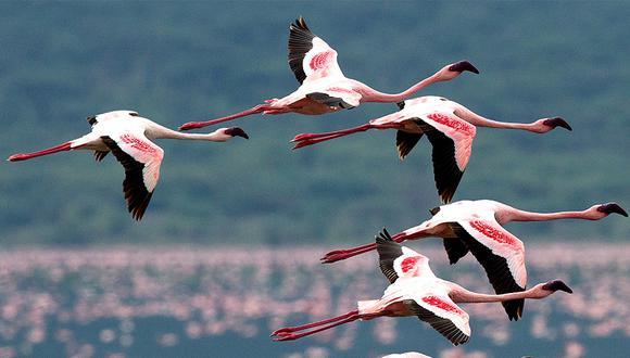 El compromiso ambiental de Camisea data de varios años atrás. Su aporte ayuda a preservar la biodiversidad en Paracas.