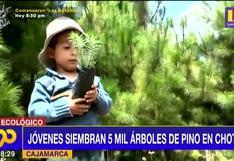 Jóvenes siembran 5 mil árboles de pino en Cajamarca