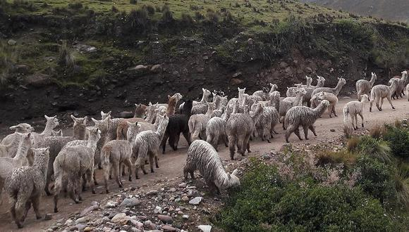 Inician acciones de prevención por bajas temperaturas en provincias altas de Cusco