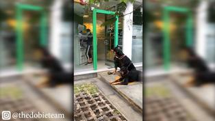 Perros doberman resguardan a dueña mientras retira dinero