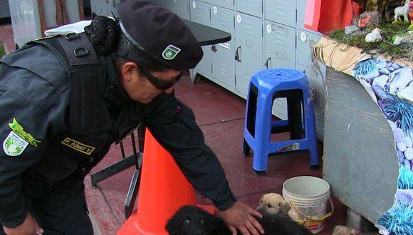 Serenos rescatan 10 perros que fueron abandonados  en costal