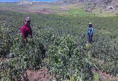 Declaran en emergencia a 34 distritos afectados por heladas en Huánuco