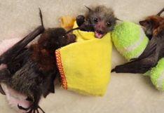 Personas atacan con fuego a murciélagos porque pensaron que transmiten el coronavirus