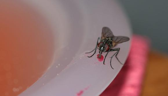 Durante los días de más calor, insectos como moscas y mosquitos hacen su aparición para incomodar a más de uno en casa. (Foto: gwendoline63 / Pixabay)