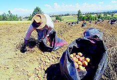 Gremios agrícolas de Junín recibirán incentivos de hasta S/129 mil no reembolsables