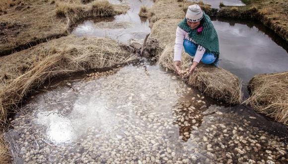 Capacitarán a 25 mujeres en la gestión de recursos hídricos en en las regiones de Arequipa, Cusco, Moquegua, Puno, San Martín, Ancash, Cajamarca, Junín, La Libertad, Lambayeque, Piura y Lima.