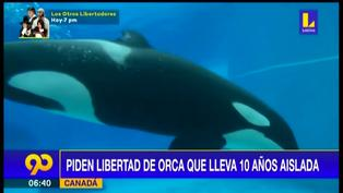 El drama de Kiska, piden liberar a orca que lleva 10 años aislada