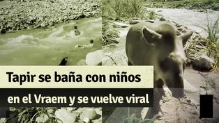 """Bebé Tapir llamado """"Toribio"""" protagoniza un tierno momento con niños en un río del Vraem"""