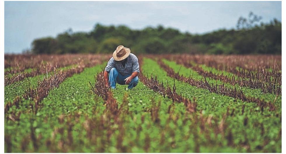 S/ 57 millones se invertirán para asegurar cultivos de pequeños productores en el Perú