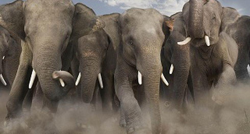 Indonesia:  Ofrecen recompensa para esclarecer la muerte de tres elefantes
