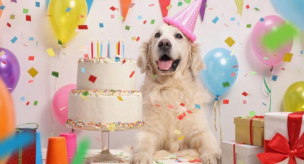 Con esta sencilla manera puedes calcular la edad de tu mascota