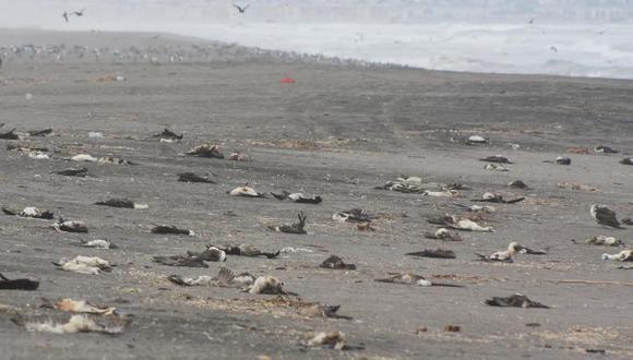 National Geographic se interesó por inusual muerte de aves en Tacna y Arica