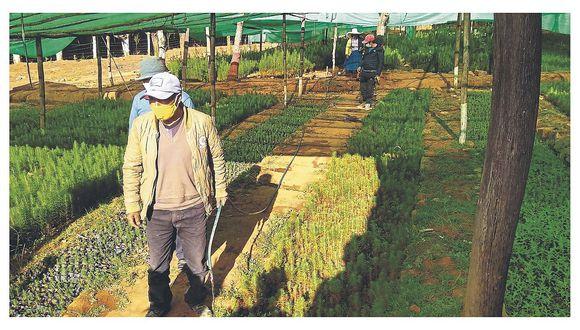 Recuperan cuatro hectáreas  del vivero de Coigobamba
