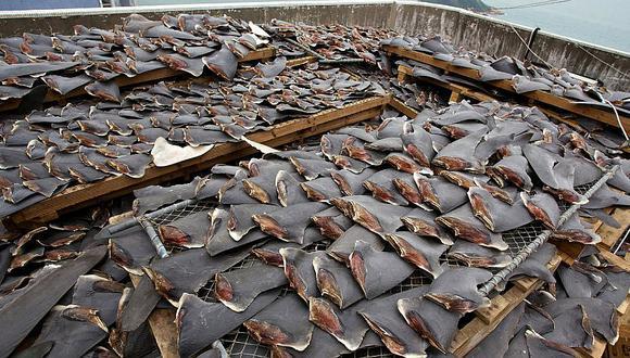 Hong Kong: Aerolínea Cathay Pacific ya no transportará aletas de tiburón para preservar especie
