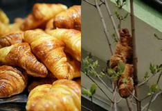 """El extraño """"reptil"""" que aterrorizó a un vecindario resultó ser un simple croissant gigante"""