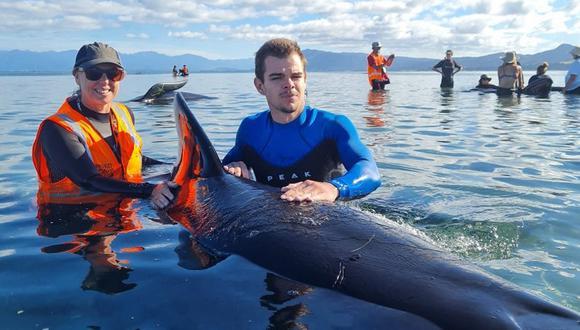 Nueva Zelanda: decenas de ballenas quedan varadas por segunda vez | NNDC |  MUNDO | CORREO