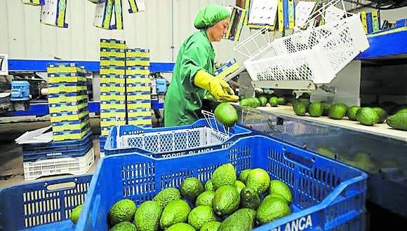 Iniciativa legislativa pretende mejorar calidad de vida en localidades donde operan agroexportadoras.