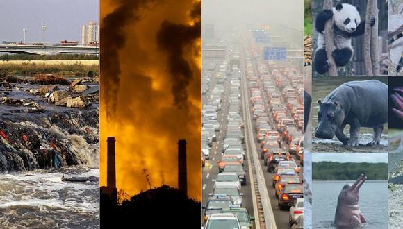 """""""Entre 500.000 y un millón de especies estarían hoy en día en peligro de extinción"""", precisa informe de la ONU"""