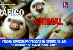 Traficantes de animales venden especies protegidas en pleno Centro de Lima