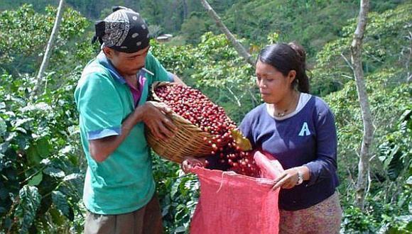En 10% cayeron las exportaciones de café