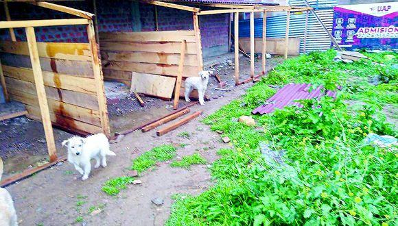 Animalistas buscan apoyo para techar casas de perros albergados
