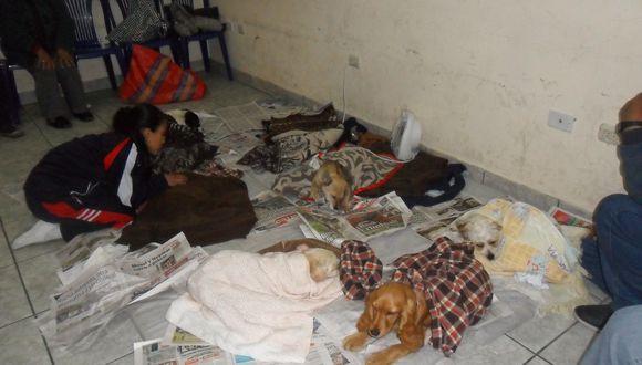 La Oroya: esterilizan a perros y gatos para evitar propagación