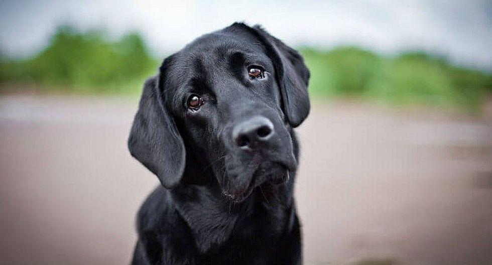 ¿Qué siente un perro antes de morir? Veterinario lo revela y conmueve a miles (FOTO)