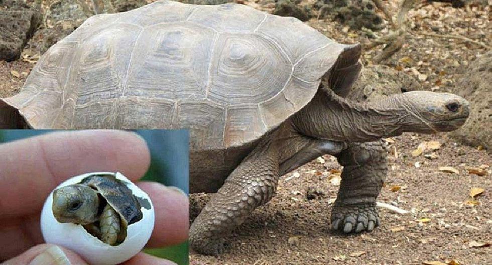 Nacen tortugas en las Islas Galápagos luego de un siglo