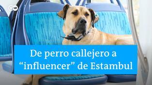 Boji: El perro 'influencer' que causa sensación en Turquía