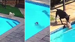 Viral: Perrito es salvado de ahogarse