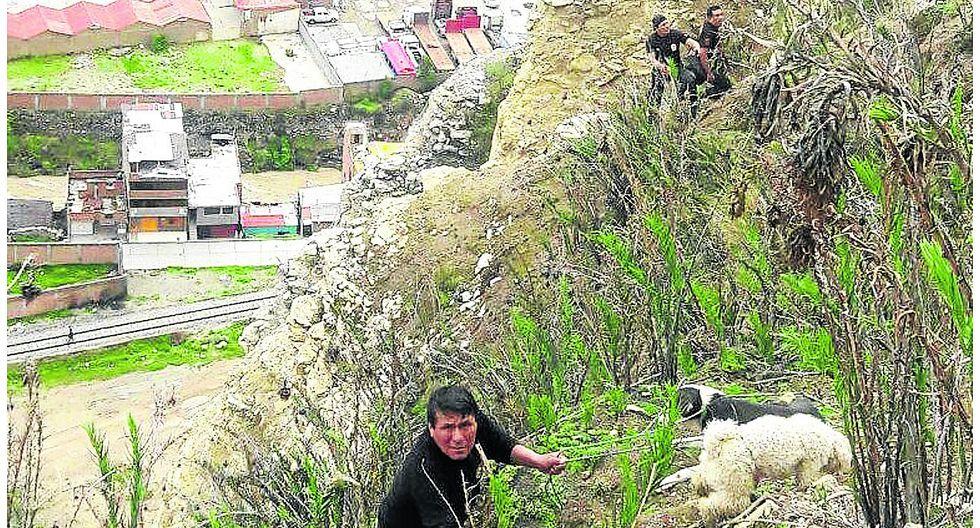 Arriesgando sus vidas, policías rescatan a canes en abismo de 300 metros