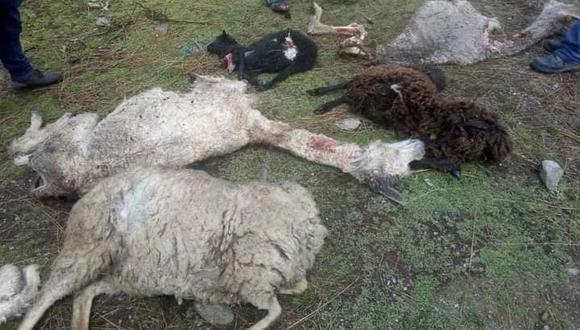 Hasta el momento aún se desconocen qué fue lo que verdaderamente mató al ganado. (Foto: Difusión)