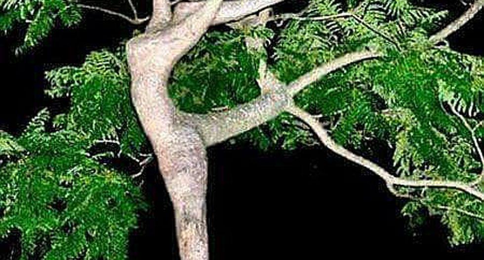 Imágenes impactantes de la naturaleza