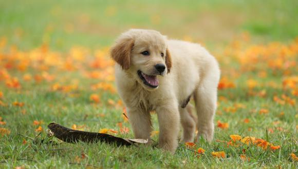 Los perros pueden ingerir cloro y pueden resultar intoxicados (Foto: freepik)