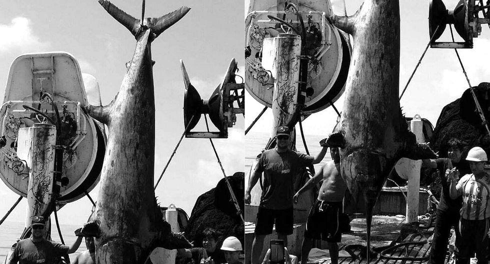 Pez espada de más de 5 metros de largo es capturado en Islay, Arequipa