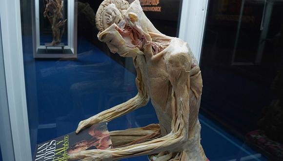 Exposición de cuerpos humanos reales regresa a Lima (FOTOS)
