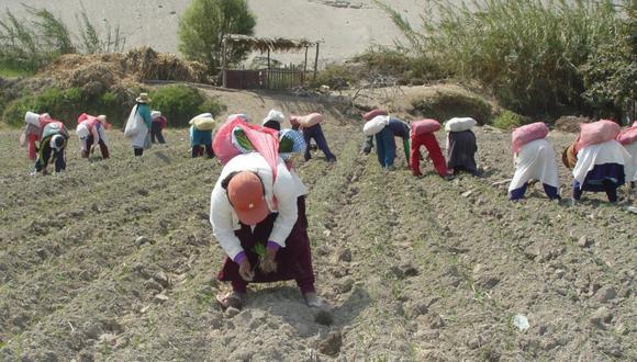 Sunafil informó que ha realizado intervenciones en 155 empresas agroexportadoras en la región Ica. (Foto: GEC)