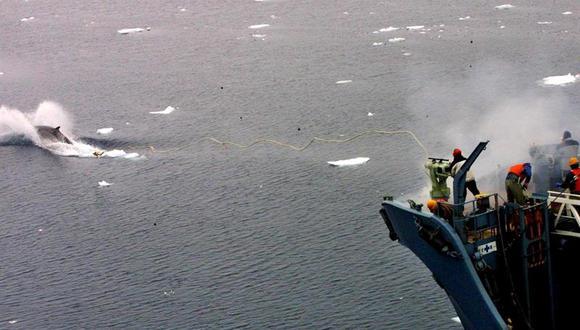 """Japón """"decepcionado"""" con el fallo de la CIJ sobre la caza de ballenas"""