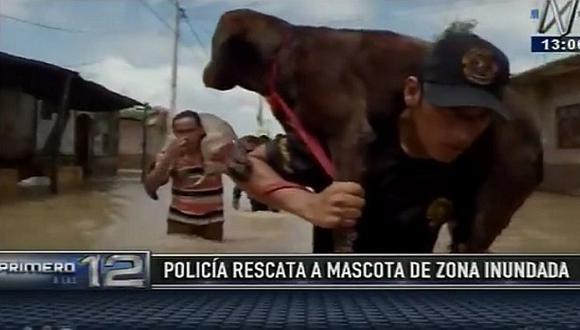 Piura: En hombros rescatan a perros en zona inundada del Pedregal (VIDEO)